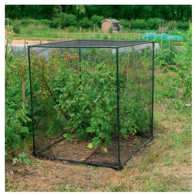 Fruit Cage Small contemporary-outdoor-planters