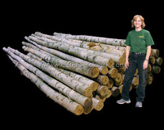 Birch Logs and Branches - Decorative Twigs, Sticks and Poles traditional-fireplace-accessories