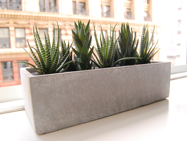 LushModern Cactus Garden Cement Planter Modern Indoor Pots And Planter