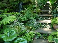 READER PHOTOS! Jay's garden in North Carolina, Day 1 - Fine Gardening