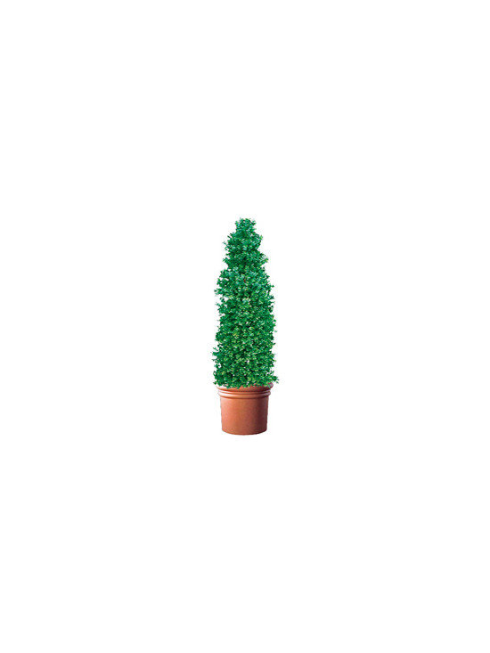 Artificial Outdoor Boxwood Cypress Style Tree - Artificial outdoor boxwood cypress style tree is available up to 8' high.