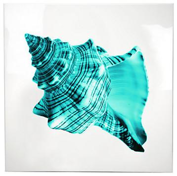 Aqua Shell 1 - Glass Coat - Sophia Fox modern-artwork