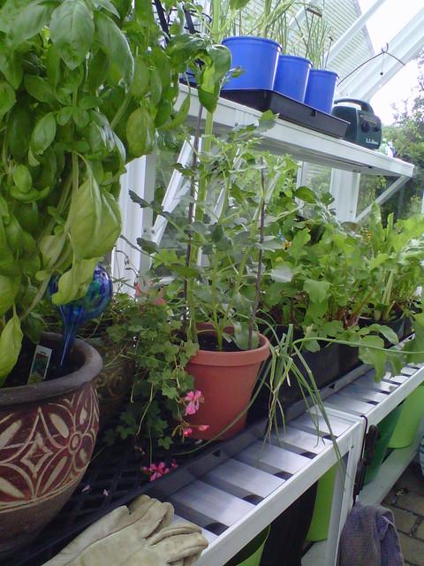 small English greenhouses / glasshouses - Victorian greenhouses / glasshouses traditional-greenhouses