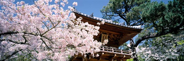 Japanese Tea Garden with Cherry Blossoms Panoramic Fabric Wall Mural wallpaper
