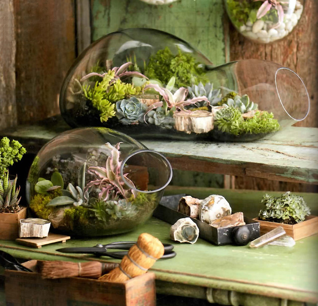 Double Terrarium  indoor pots and planters