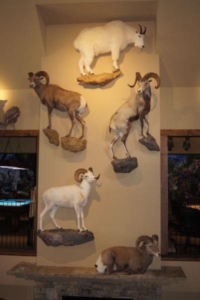 Trophy Room Design Ideas: Bland Trophy Room Addition And Remodeling Project