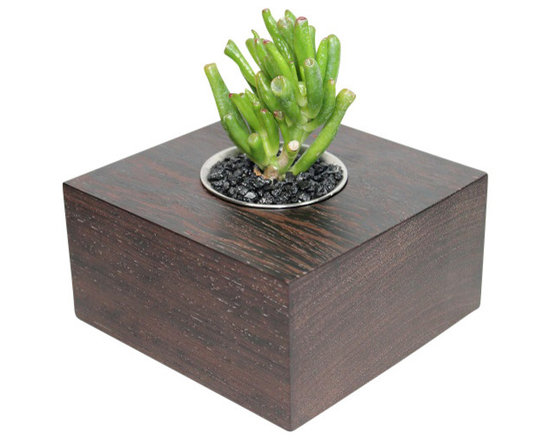 """MODgreen - Crassula - 5"""" Exotic Hardwood Potted Cactus and Succulents - This Wenge planter (Milletia laurentii) has traveled all the way from Western Africa to become part of your collection. The beautiful dark colored and wavy pattern exudes elegance and style. Also pay attention to the little white streaks embedded in the grain which make it look even more attractive and unique. We have planted a popular compact crassula 'Gollum' to give you a nice elegant and modern look. Place indoors under bright light. Water only twice a month and avoid spilling when watering. Tung oil or beeswax will help extend the lifespan of your planter and maintain a shiny look."""