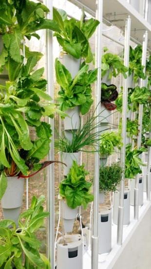 Windowfarms contemporary-indoor-pots-and-planters