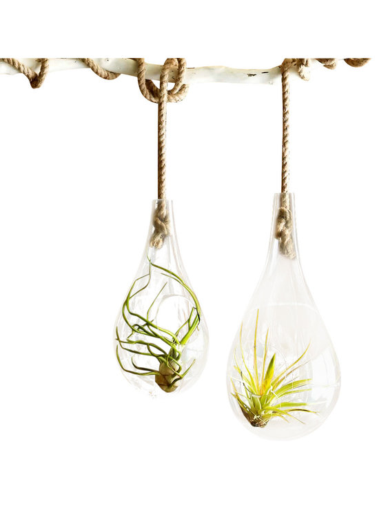 Recycled Glass Hanging Terrarium - These attractive hanging terrariums are made from free-blown glass with high recycled content.  Display with air plants or fill with soil and add some soil and grow a small succulent in the space. Hang these glass bubble terrariums indoors, where they can catch the light.