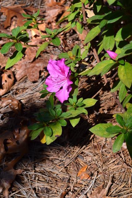 Oleander Residence traditional-landscape