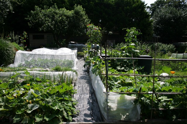 The Kitchen Garden traditional-landscape