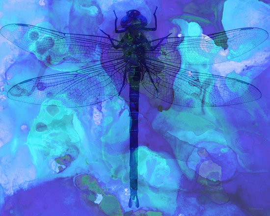 Animals, Fish and Birds - Blue Dragonfly by Sharon Cummings. Buy Fine Art Prints Online.