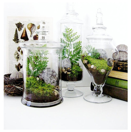 Traditional Terrariums by Etsy