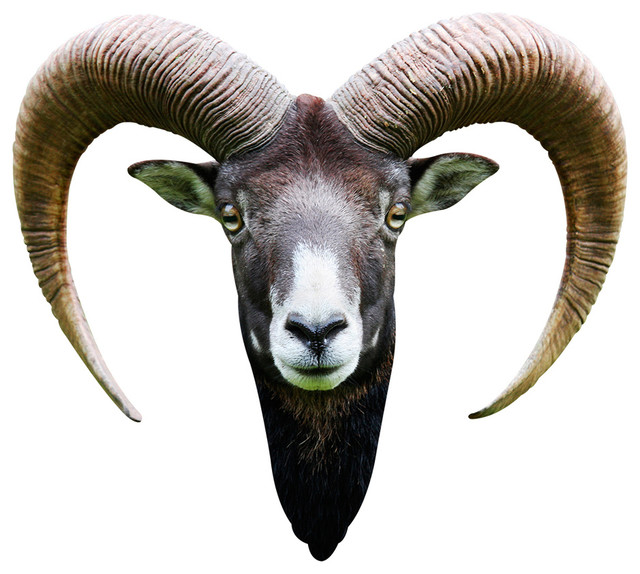 Long Horned Goat Adhesive Wall Decal Contemporary