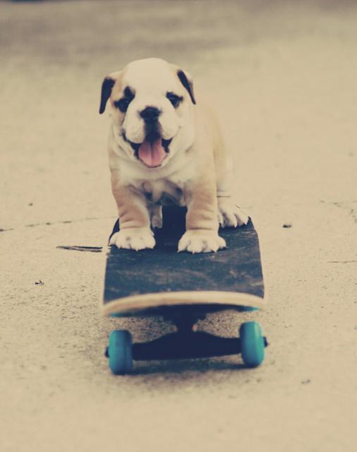 English Bulldog Skateboarding Print By Snowy4052002 eclectic-nursery-decor