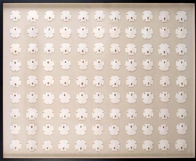 White Sand Dollars   Natural Curiosities artwork