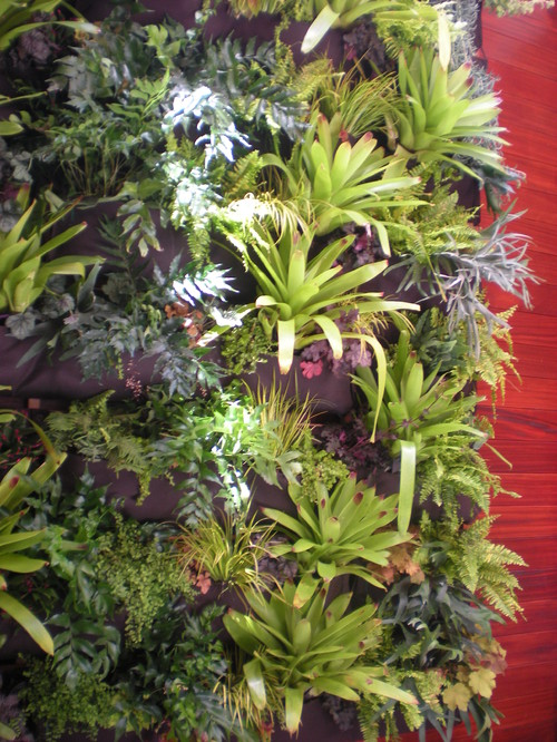 air plant display air plants where to buy air plants care guide install it direct