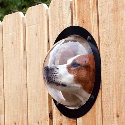 Dog Peek contemporary-pet-care