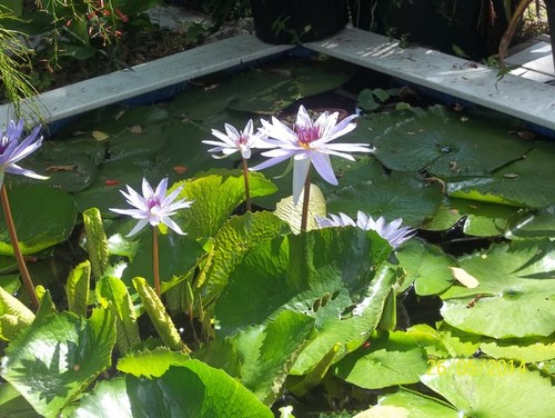 Newbie pond w o fish questions for Garden pond questions