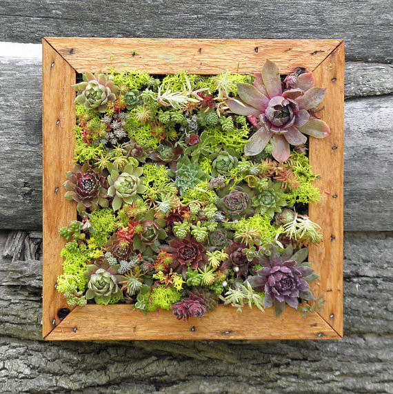 Succulent Vertical Living Wall Art Kit by So Succulent eclectic rugs