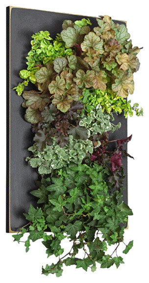 Grovert Wall Planter - Black - Contemporary - Indoor Pots And Planters ...