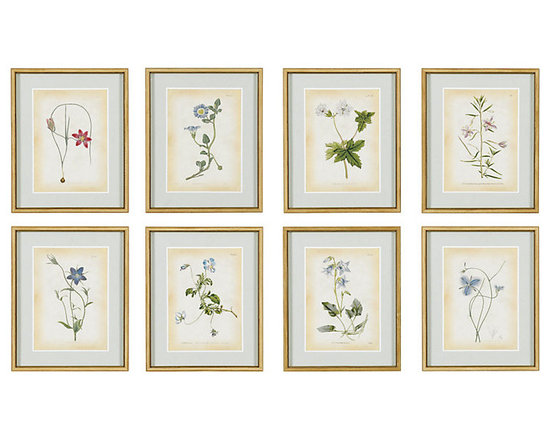 Ballard Designs - Curtis Botanical Framed Print - Rubbed cream wood frame with gold undertones. Bead details. Glass front. These lovely botanicals are based on 18th century studies first published in Curtis's Botanical Magazine, the longest running botanical magazine in publishing history. Each beautifully detailed image is printed on cream paper with soft spa faux French mat. Curtis Botanical Print features: . . .