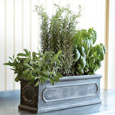 Herb Window Box traditional-outdoor-planters