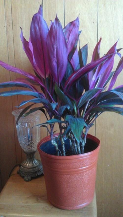 Low Light Plants Outdoor Low Light Indoor Plants Www