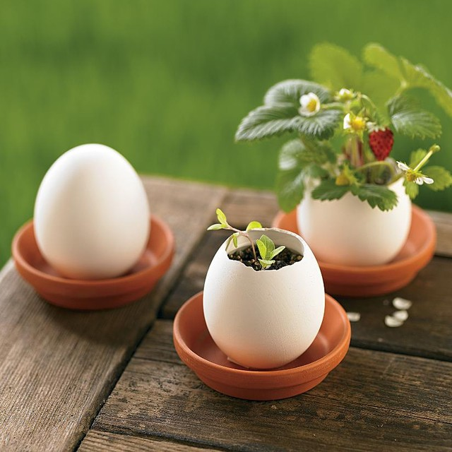 Organic Strawberry, Mint & Petunia Plant Egglings eclectic-indoor-pots-and-planters