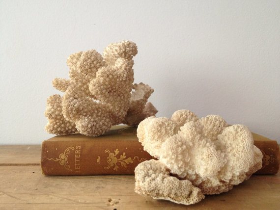 Coral Fragments by Lilly Queen Vintage tropical-home-decor