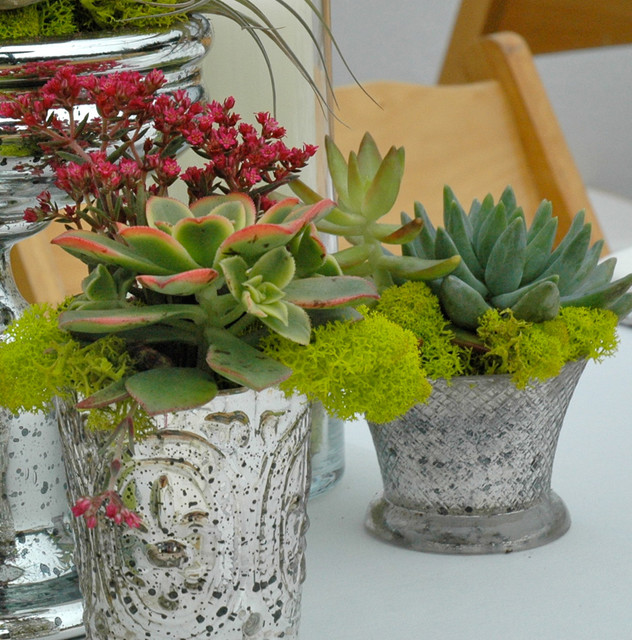 Mercury Glass Succulent Cups  plants