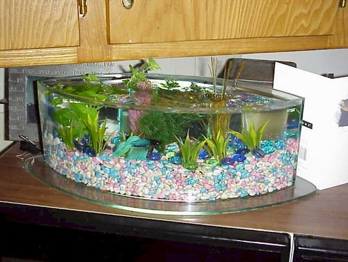 Do bettas mix well with other fish for Can you put betta fish with other fish