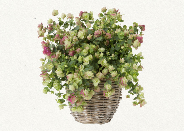 traditional plants Flowering Oregano