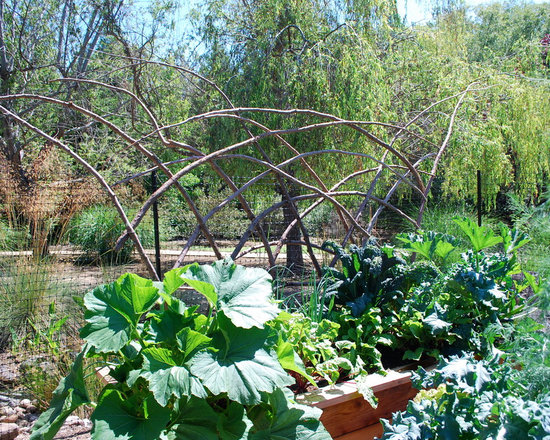 Redwood Branch Trellises - Redwood trellises are a great addition to raised garden beds.  They can be used for green beans, peas, indeterminate tomatoes, and cucumbers.  Photo by Steve Masley.