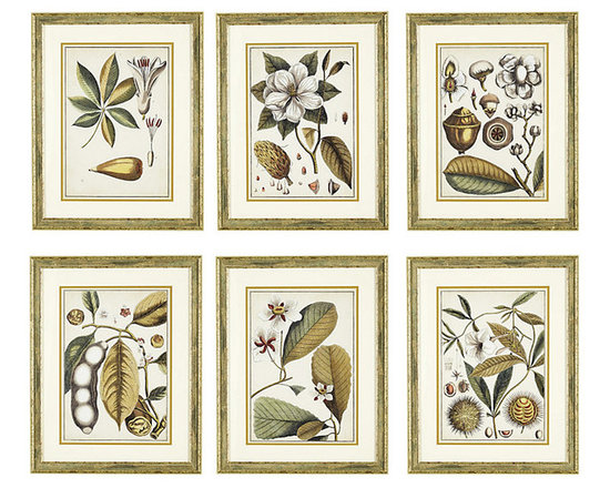 Ballard Designs - Ivory & Gold Botanical Framed Print - Printed on aged parchment background. Ivory linen mat. Champagne finish wood frame. Glass front. Recreating the look of an antique botanical study, our series is brought to life in sophisticated shades of ivory, gold and olive green - a neutral palette for any space. Hang in a grid to create a high-impact gallery wall. Ivory & Gold Botanical Prints feature: . . . .