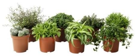 Modern Plants by IKEA
