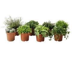 Himalayamix Potted Plant modern-plants