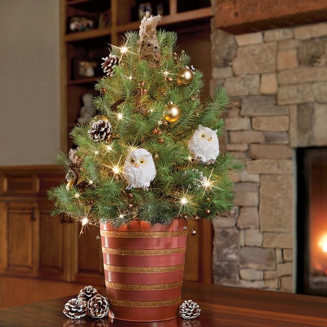Woodland Decorated Italian Stone Pine Tree - 1.5 Gallon ...