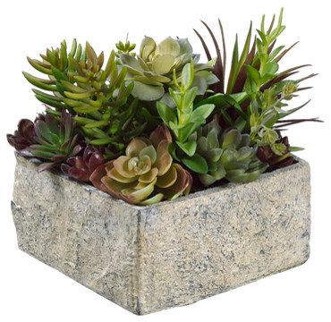 Inch Succulent Gardenin Paper Mache Pot with Re-Shippable Box, Green ...
