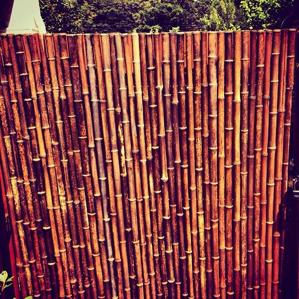 Japanese inspired garden in Grant Park asian