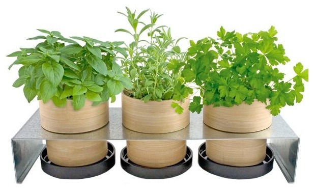 Bamboo Grow Pot Rack contemporary indoor pots and planters