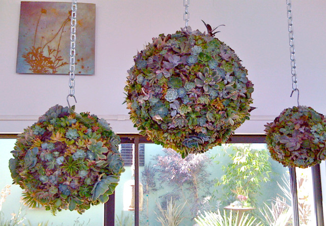 Succulent Orb Forms outdoor-pots-and-planters