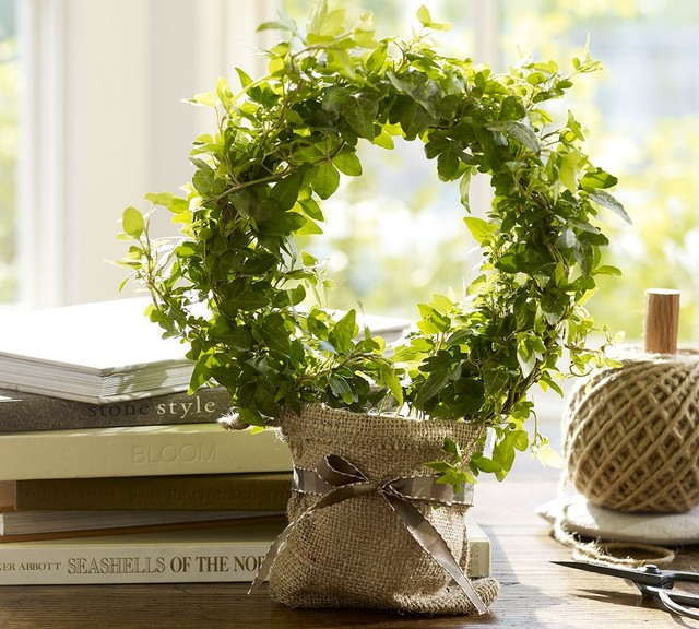 Live Ivy Topiary traditional-plants