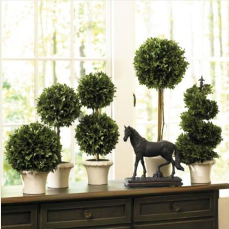Boxwood Topiaries traditional-plants