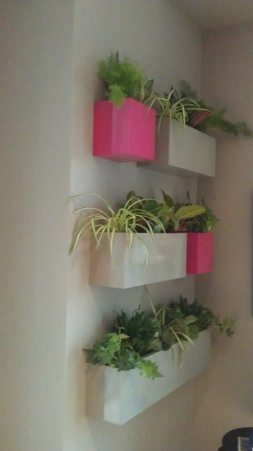 Downtown condo contemporary plants chicago by kara for Indoor decorative live plants