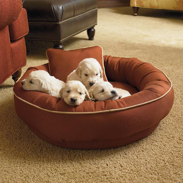 Chew-resistant Cordura Pet Bed traditional-pet-beds