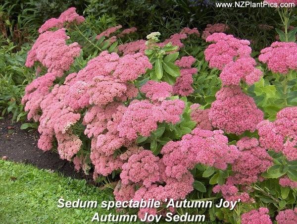 Brennan garden traditional-plants