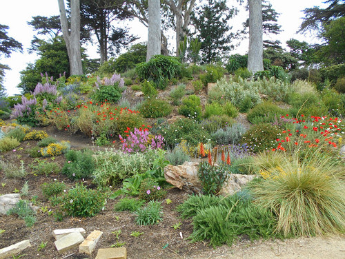 In San Francisco Botanical Garden In June