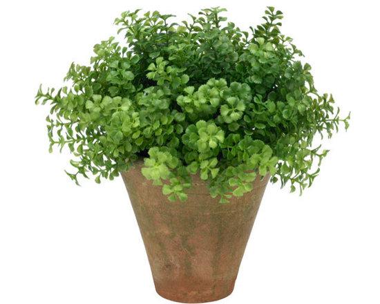 Button Leaf Plant -