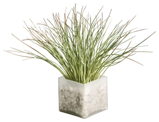 Seaside grass waterlook traditional plants by ethan for Indoor decorative live plants